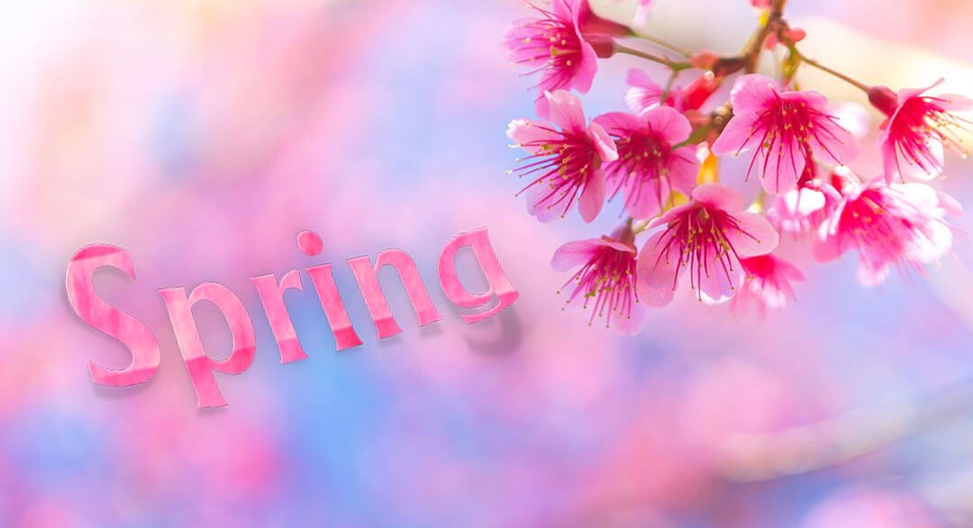 Spring Massage Specials - Fort Collins